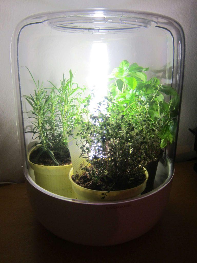 Drivhuset set fra siden med urter i