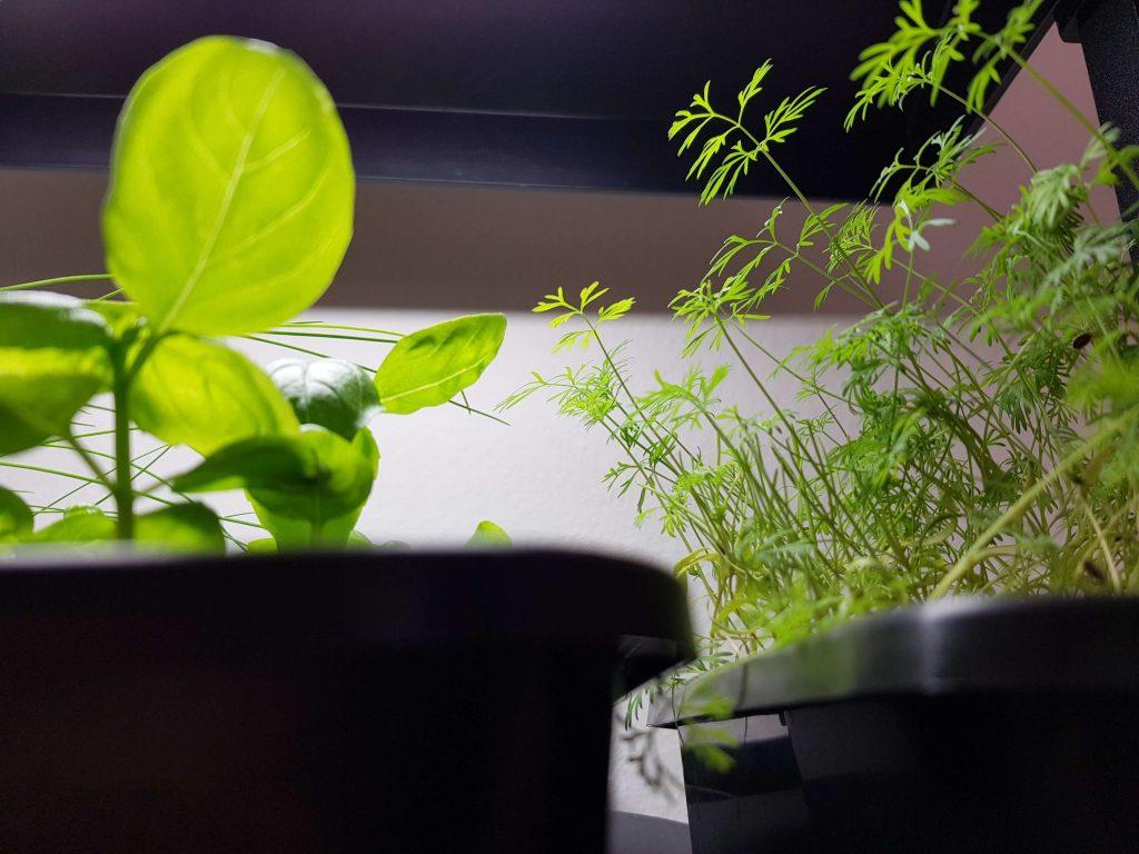 Planterne vokser fint, men det går ikke så hurtigt, som vi kunne håbe på