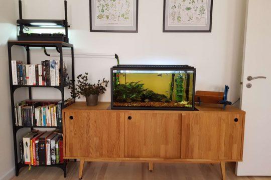 Overblik - vores akvaponiske system i stuen. Akvarievand bliver ledt op til planterne og tilbage til akvariet igen.