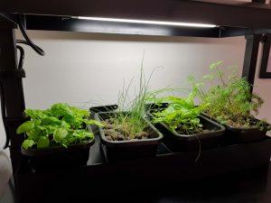 Her ses plantekassen med de fire bakker med krydderurter