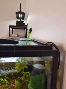 Fra akvariet bliver vandet pumpet op gennem et rør til plantekassen