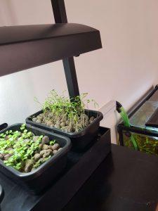 Når plantekassen er fyldt med vand, begynder vandet automatisk at løbe ned i akvariet igen